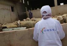 مخالفة على النيابة العامة وحجز وإتلاف 108 طنا من فضلات الدجاج